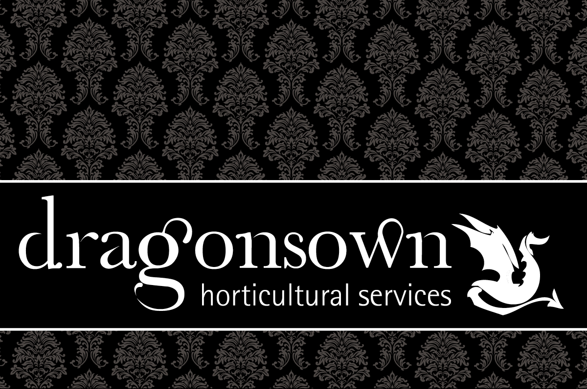 DragonSown Logo and Business Card